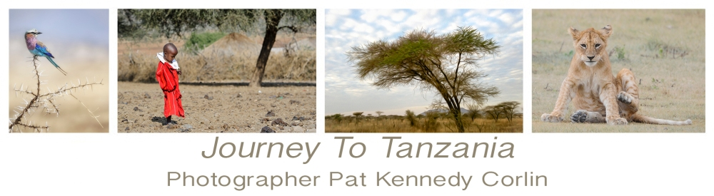 Journey To Tanzania Card Collection Banner Pat Kennedy Corlin