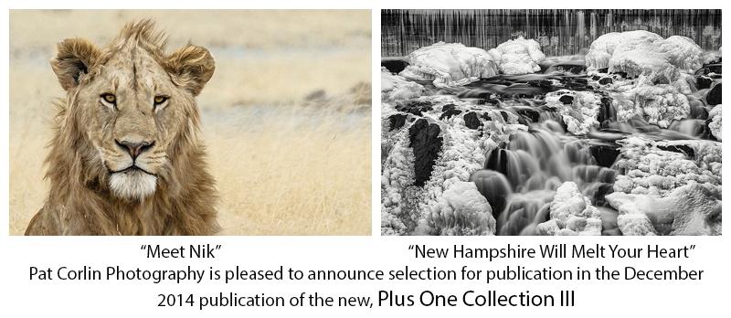 Plus One Collection Publication 2014