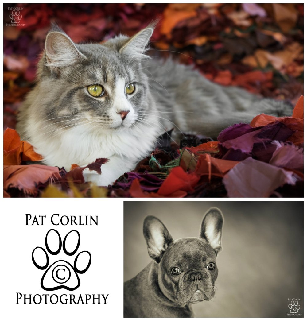 Introducing Furry Fridays Petography by Pat Corlin at the Seacoast Photography Studios!