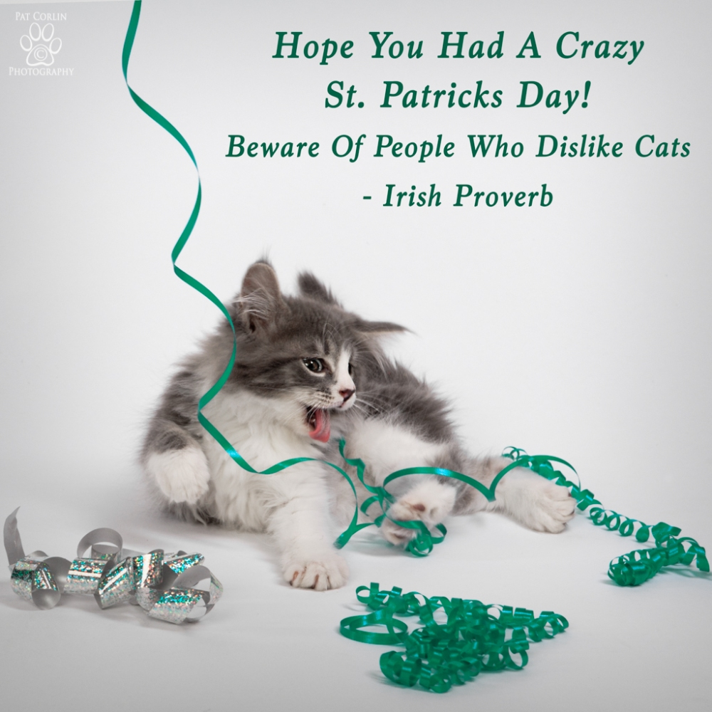 Beware Of People Who Dislike Cats - Irish Proverb